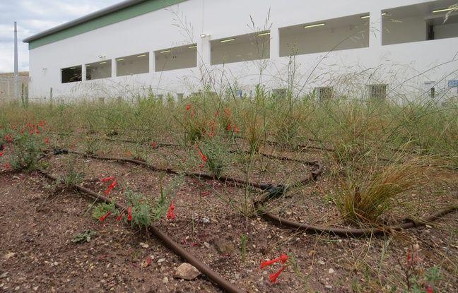 La végétation disposée à l'extérieur des bâtiments des Baumettes II.
