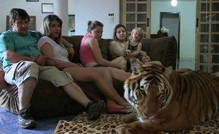 Une famille brésilienne vit avec sept tigres