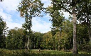Une parcelle de régénération en forêt d'Orléans, dans le massif d'Ingrannes, le 22 septembre 2011.