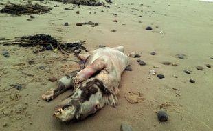 Une étrange carcasse a été retrouvée sur une plage britannique, le 22 février 2013