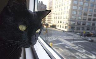 Un chat regarde par la fenêtre.