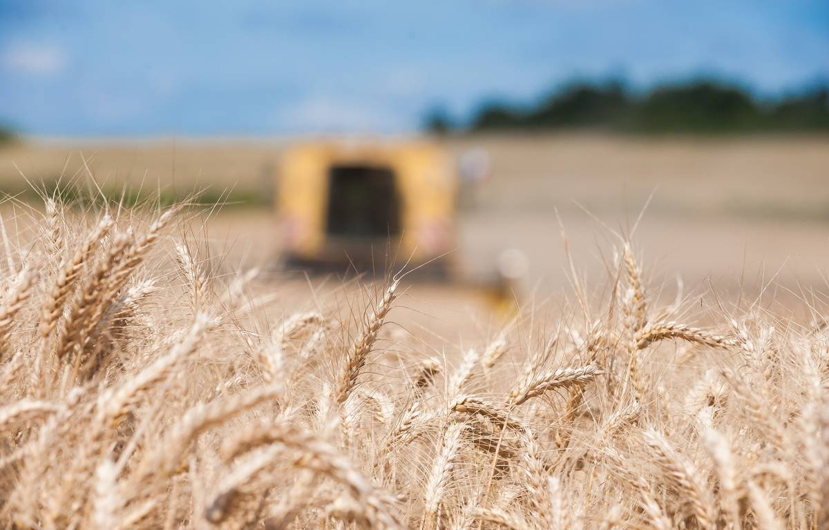 Moisson de blé tendre à Poursac, en Charente, le 8 juillet 2016. – JEAN MICHEL NOSSANT / SIPA