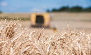 Moisson de blé tendre à Poursac, en Charente, le 8 juillet 2016.