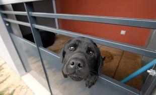 Un chien dans un refuge après avoir subi de la maltraitance. (Archives)