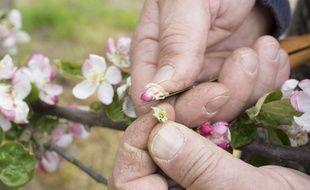 Vers une agriculture raisonnée et respectueuse de la biodiversité.