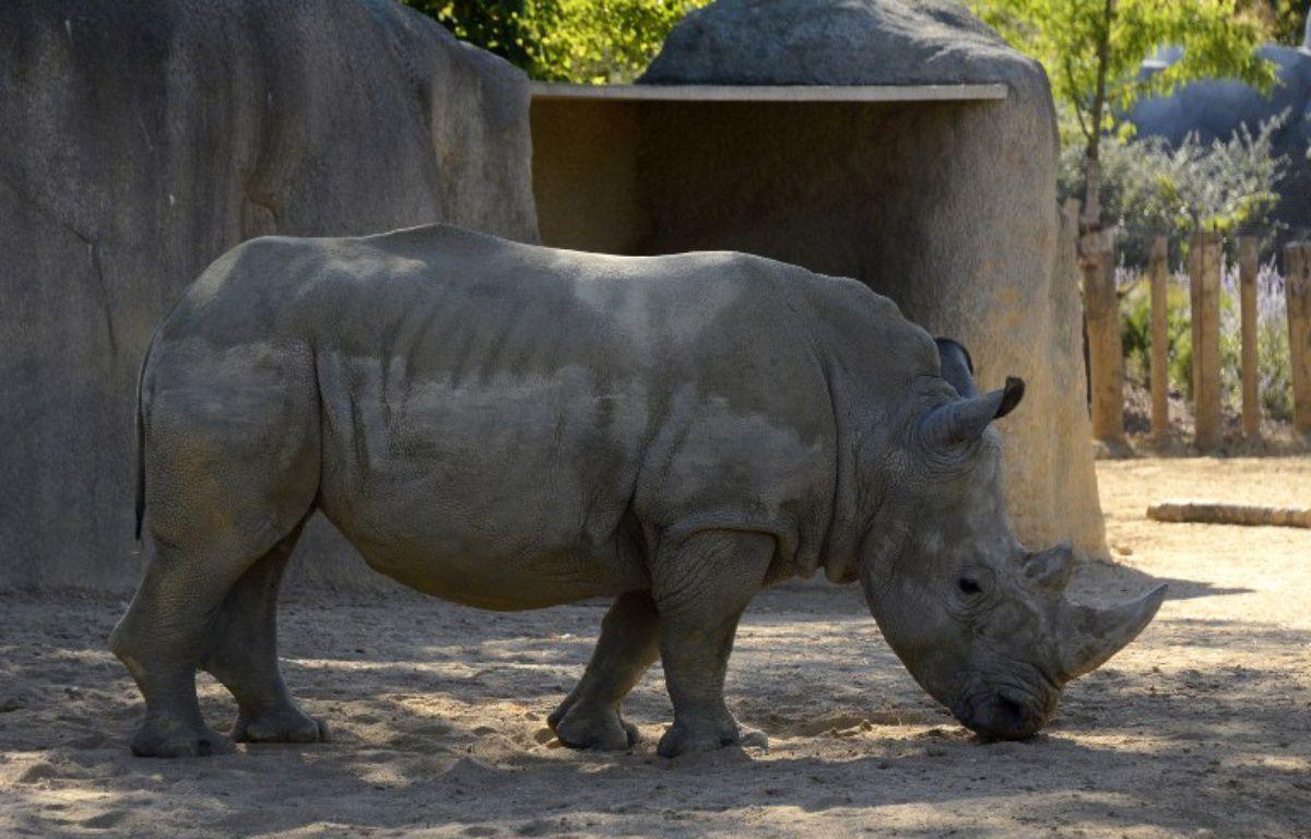 Un rhinocéros blanc du zoo de Paris – BERTRAND GUAY / AFP