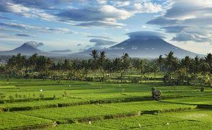 Vue des rizières près de Ubud à Bali (Indonésie)