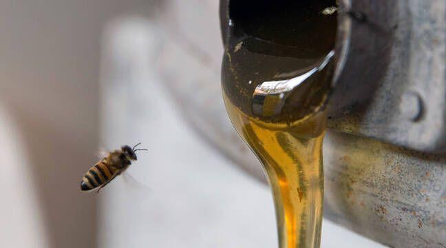 Attention aux miels « aphrodisiaques », les autorités alertent sur les effets secondaires de faux produits naturels