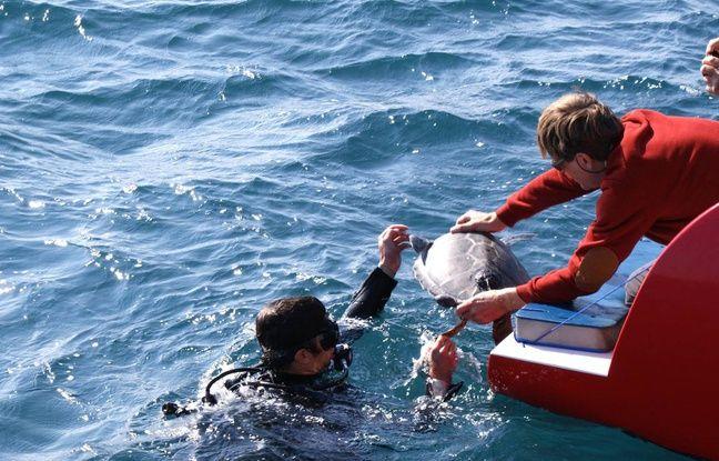 Le Cest Med a lâché deux tortues en mer cette semaine.
