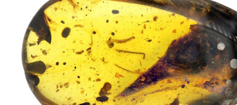 La tête et le bec de ce dinosaure sont enfermés dans l'ambre depuis 99 millions d'années.