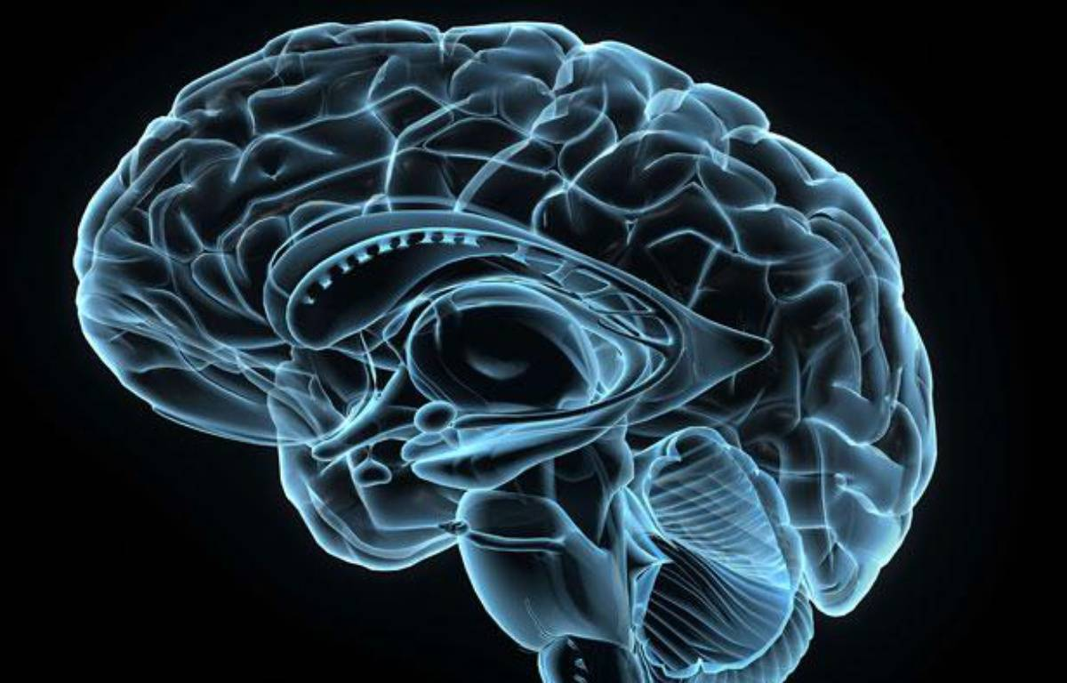 Image 3-D d'un cerveau humain. – PURESTOCK / SIPA