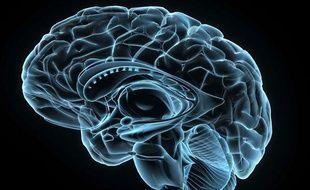 Image 3-D d'un cerveau humain.