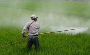 Herbicide dans un champ (illustration).