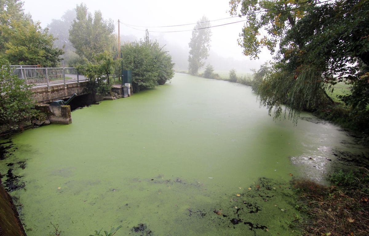 La rivière la Seiche, ici à Janzé (Ille-et-Vilaine), le 20 septembre 2017, soit un mois après la pollution de Lactalis. – C. Allain / 20 Minutes