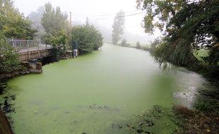 La rivière la Seiche, ici à Janzé (Ille-et-Vilaine), le 20 septembre 2017, soit un mois après la pollution de Lactalis.
