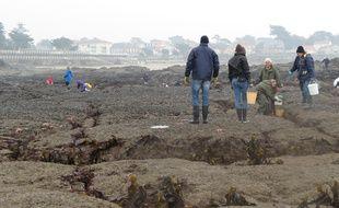 A Prefailles, le 21 mars 2015- Peche a pieds a Prefailles a l occasion de la maree du siecle
