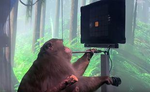 Le singe de Neuralink en train de jouer à Pong avec «la pensée» grâce à une puce implantée dans le cerveau.