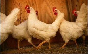 Une Galloise de 24 ans n'a pas hésité à renoncer à ses vacances pour pouvoir payer les 1.800 livres (près de 2.700 euros) demandés par le vétérinaire pour sauver sa poule qui s'était blessée.