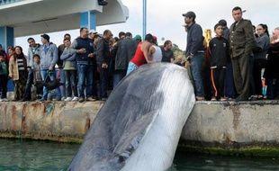 Des pêcheurs tunisiens tirent une baleine prise dans leurs filets, à Sidi Bou Saïd le 9 mars 2014