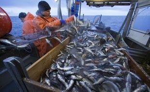 Des pêcheurs remontent leurs filets sur un bateau de pêche au large de l'Allemagne en avril 2013. (Photo illustration).