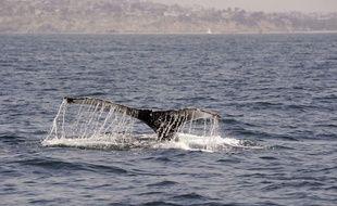Un homme en paddle a croisé un groupe de baleines et deux dauphins