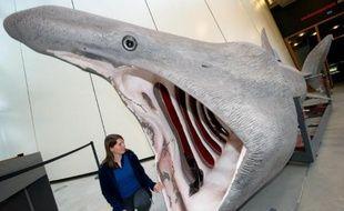 """Une campagne menée autour de l'archipel des Glénan (Finistère) pour recenser la présence de requins pèlerins conclut à une année """"exceptionnelle"""" avec une concentration jamais observée depuis six ans, s'est félicitée vendredi l'association pour l'étude et la conservation des sélaciens (APECS)."""