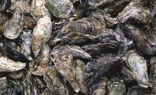 Des huîtres (illustration).