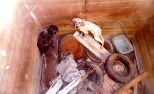 Les deux animaux, apeurés, étaient emprisonnés dans une cuve dont ils n'auraient pas pu sortir vivant