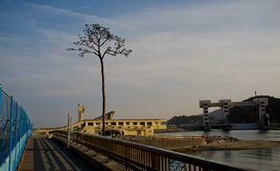 Le «pin miraculé» de Rikuzentakata, qui a résisté au tsunami même si l'eau de mer a fini par le tuer, est devenu symbole d'espoir. Il a été restauré et domine aujourd'hui l'immense chantier de la ville en reconstruction.