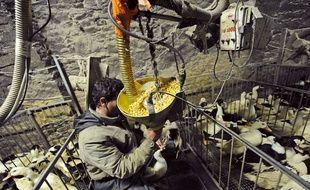 Le cas a été détecté dans une salle de gavage de canards dans le Lot-et-Garonne.