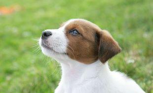 Le chien, surnommé Tippie, a été recueilli par la RSPCA.