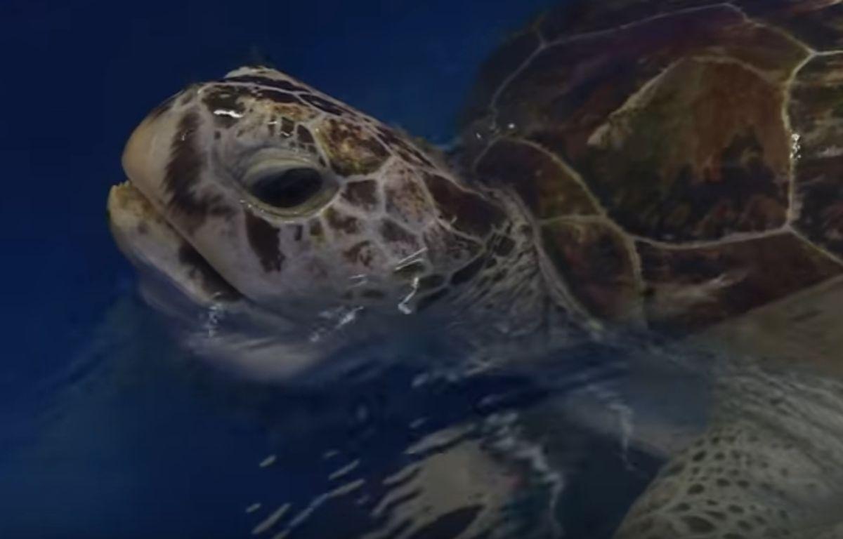 La tortue marine  – AFP