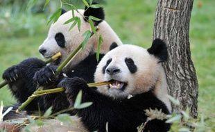 Les crottes de pandas et autres déjections des pensionnaires du zoo de Beauval (Loir-et-Cher) seront recyclées au sein d'une unité de méthanisation qui alimentera le parc animalier en gaz à partir de l'an prochain, a annoncé vendredi la direction du zoo.