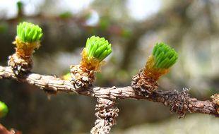 Le CREA Mont-Blanc chercher des volontaires pour observer la floraison des arbres et plantes de montagne afin d'étudier le effets du dérèglement climatique.