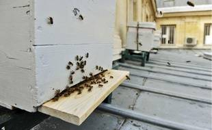 Cinq ruches contenant chacune environ 50000abeilles ont été installées le 1er mai dernier à la mairie du 4e arrondissement.