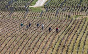 Désinfection du matériel, distance dans les vigne... Les propriétés viticoles mettent en place des mesures de précaution contre le Covid-19.