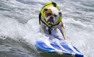 Illustration: Un chien qui fait du surf.