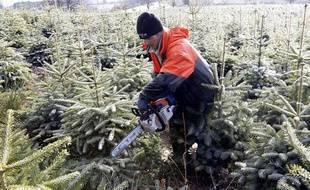 Une pépinière produisant des sapins de Noël dans la Loire.