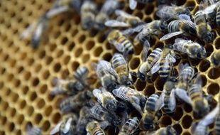 Les bêtes ont été attaquées par des essaims d'abeilles. Illustration.