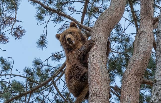 La colline aux ours est un nouvel espace du géoparc de Han, en Belgique.