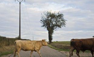 Des chercheurs danois inventent une herbe plus digeste qui permettra aux vaches de produire moins de méthane
