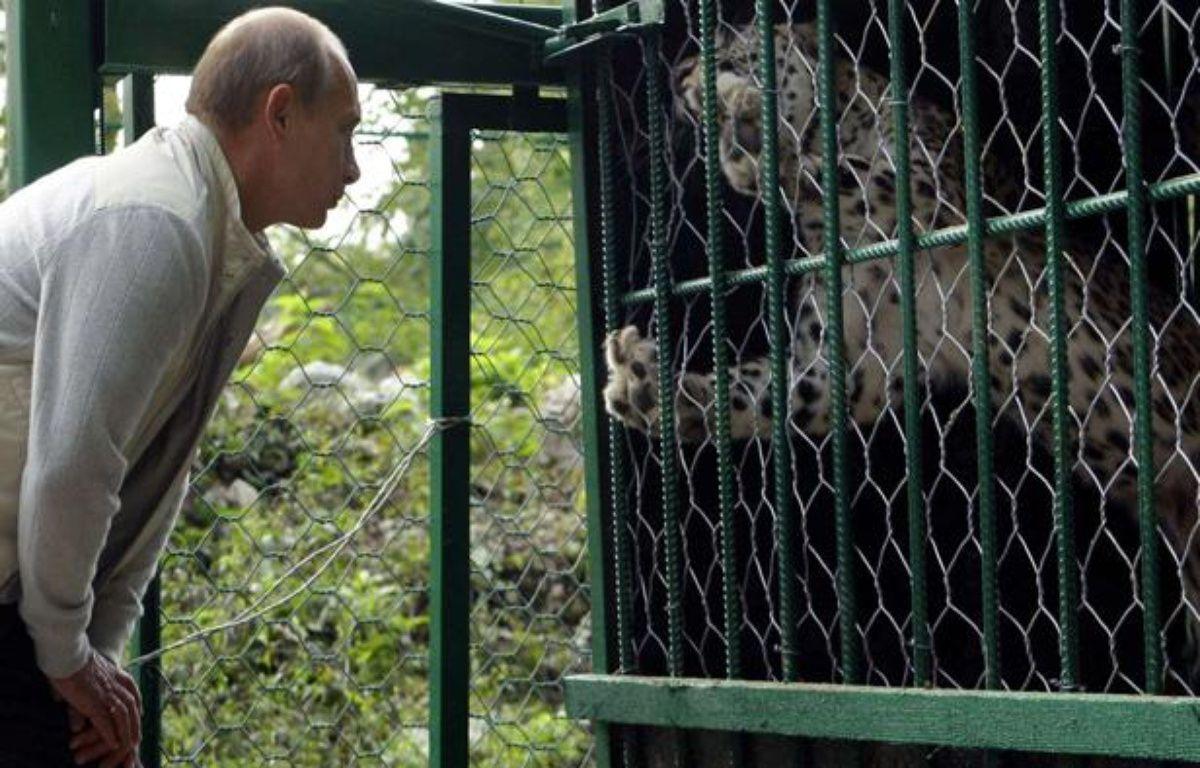 Vladimir Poutine admire un léopard dans le parc national de Sochi, en Russie, en septembre 2009. – Alexei Druzhinin/SIPA