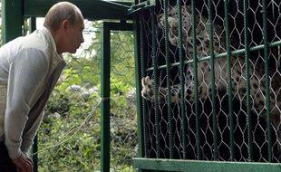 Vladimir Poutine admire un léopard dans le parc national de Sochi, en Russie, en septembre 2009.