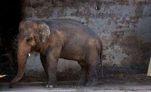 Kaavan, éléphant du zoo d'Islamabad