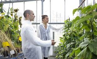 Les salariés de la start-up Micropep développent des traitements personnalisés pour les plantes.