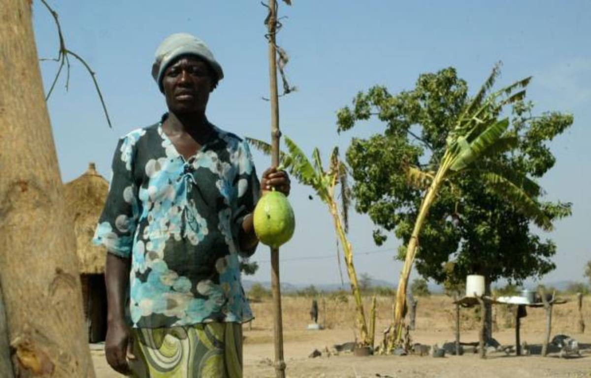 Connie Garandemo, une pauvre paysanne, ne mange pas tous les jours à sa faim depuis que la sécheresse s'est abattue sur le Zimbabwe, jadis grenier à blé de l'Afrique australe, réduisant sa récolte à trois petits seaux de céréales. – Jekesai Njikizana afp.com