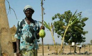 Connie Garandemo, une pauvre paysanne, ne mange pas tous les jours à sa faim depuis que la sécheresse s'est abattue sur le Zimbabwe, jadis grenier à blé de l'Afrique australe, réduisant sa récolte à trois petits seaux de céréales.