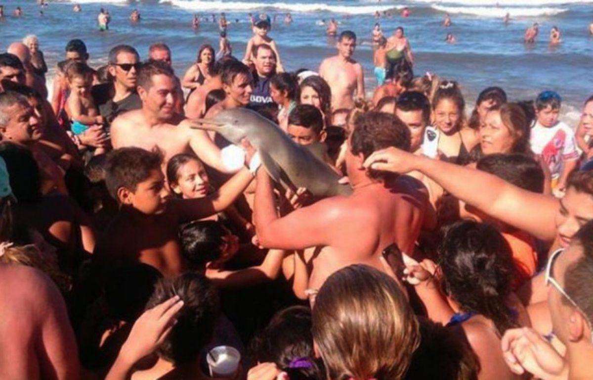 Une capture d'écran d'un tweet montrant le dauphin photographié par les touristes argentins. – DR