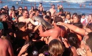 Une capture d'écran d'un tweet montrant le dauphin photographié par les touristes argentins.