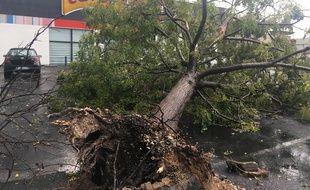 Un arbre déraciné, au Crès, après la tornade.